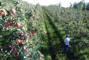"Edgard Artero: ""La fruticultura no le interesa a los gobernantes"""